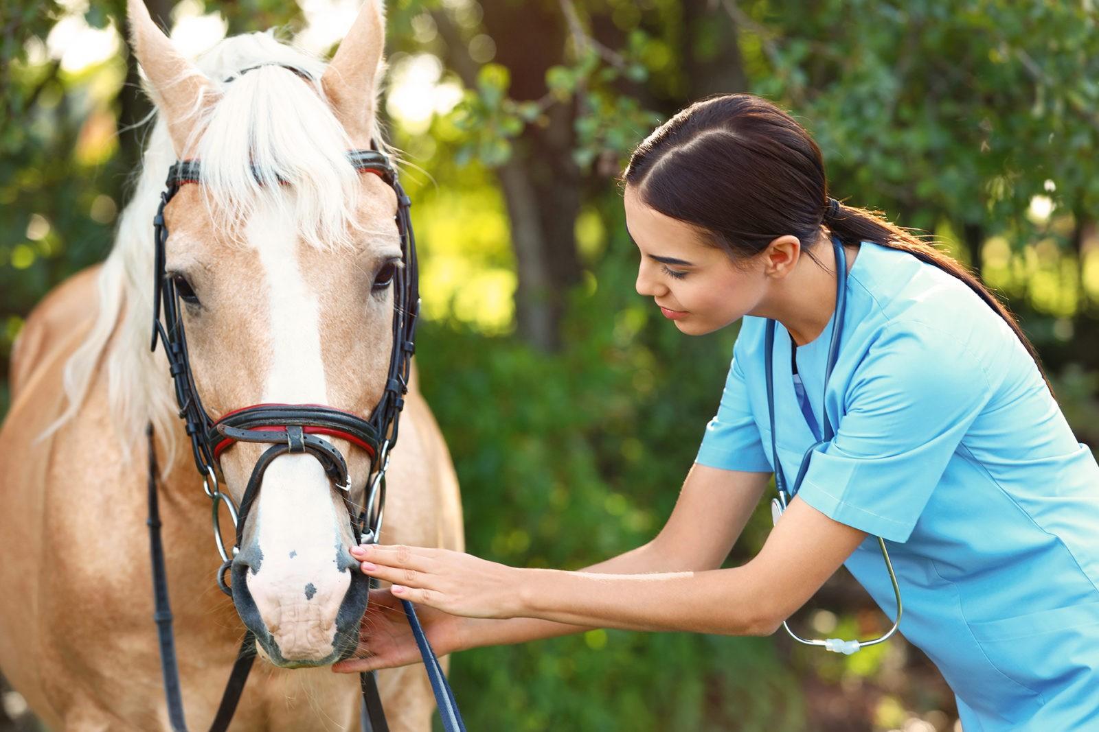 Young veterinarian examining palomino horse outdoors on sunny day