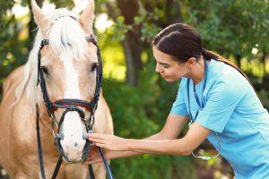 Young veterinarian examining palomino horse outdoors on sunny da